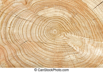 Natural tree pattern - Close-up of a cross section of a tree...
