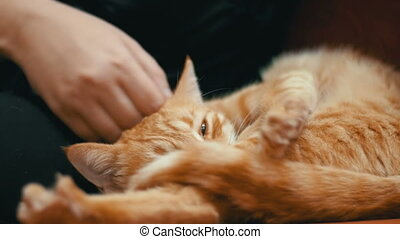 Woman Stroking a Red Cat Lying on the Couch