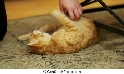 Woman Stroking a Red Cat Lying on the Carpet. Cat playing...