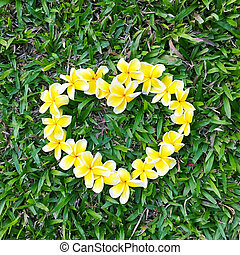 Yellow frangipani arranged in a heart shape. On the green grass Day of Love for Nature summer