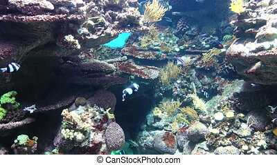 Underwater Fish And Coral - Underwater footage of fish...