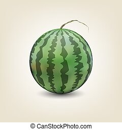 Photo realistic watermelon, vector illustration. - Photo...