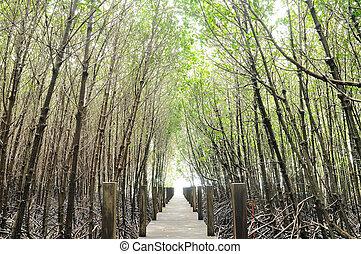 Mangrove nature trail in Chantaburi province, Thailand
