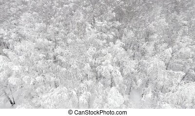 Aerial view of a forest at winter