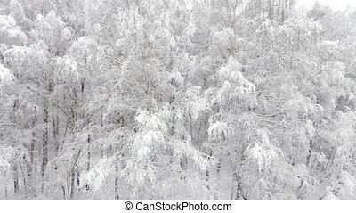 Aerial view of a forest at winter - Aerial view of the...