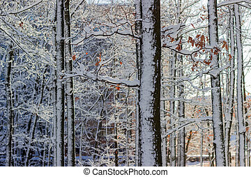 Fragment of deciduous trees covered with snow against the...