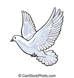 Free flying white dove, isolated sketch style illustration -...