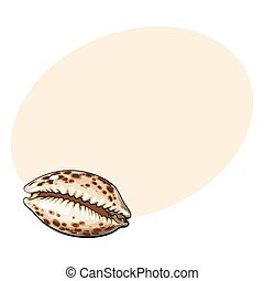 Colorful cowrie or cowry sea shell, sketch style vector...
