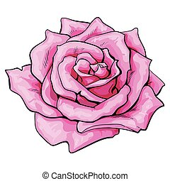 Deep pink rose, top view isolated sketch vector illustration...