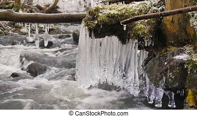 Long icicles hang above dark cold water of mountain river. Icicles glitter above milky water of stream. Branches of fallen trunks are covered by small flakes of powder snow
