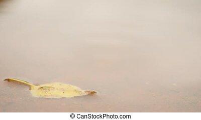 Raining day. Water on tennis court. Yellow birch leaf in...