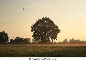 Oak tree on a misty morning