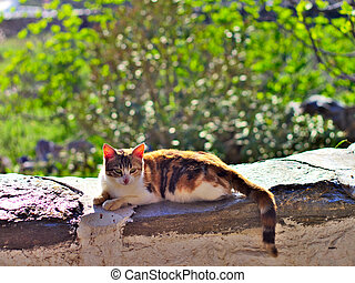 Cat relaxing in the sun. - Lazy cat relaxing in sunlight on...