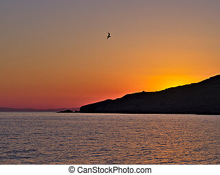 Sunset by the sea, seagull flying. - Beautiful seaside...