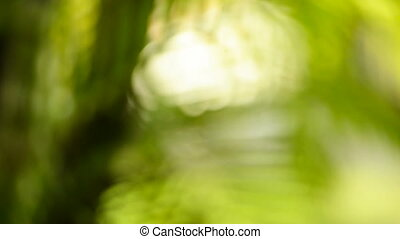 Green Bokeh Effect In Jungle - Green bokeh effect with...