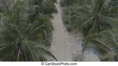 Palm tree gravel road - Aerial view following rural gravel...
