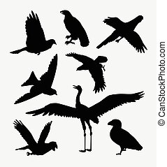 Bird activity animal silhouette - Bird activity silhouette....