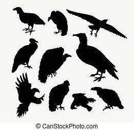aquila,  silhouette, avvoltoio,  condor, uccello