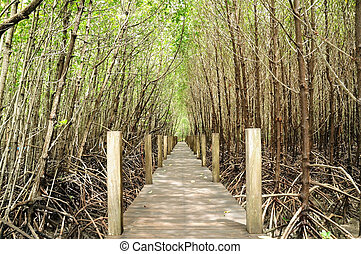 Mangrove nature trail in Chantaburi province, Thailand