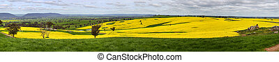Canola farmlands Scenic Vista - From high up on the back...