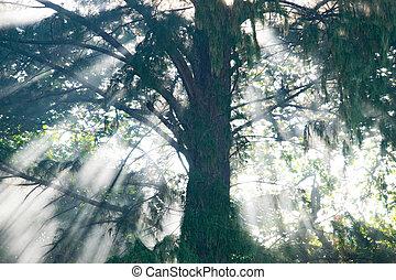 Mystical rain forest