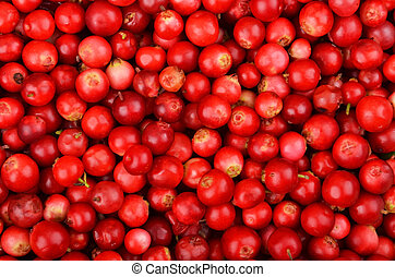 Lingonberry (Vaccinium vitis-idaea) - Close up of red ripe...