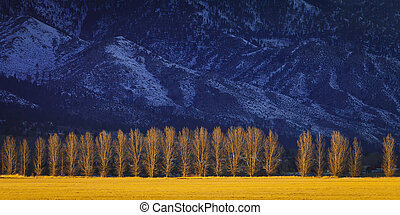 Treeline at sunset with snowy mountains in the background....