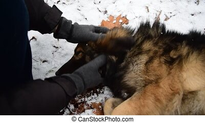 Man pats his loved mongrel dog lying on the snow