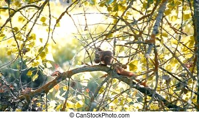 Squirrel sitting on a branch with a nut in paws in a sunny...