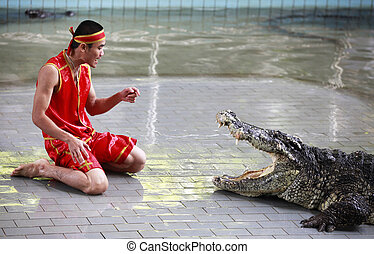Crocodile show in Thailand - THAILAND, PATTAYA 02 NOVEMBER:...