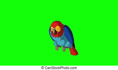 Colorful Parrot Wakes Up. Green Screen Video Footage. Looped...