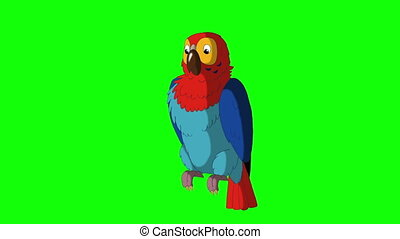 Colorful Parrot Cleans Feathers. Animal Green Screen Video...