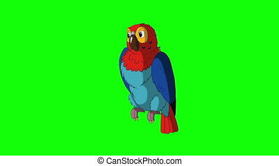 Colorful Parrot Turns. Green Screen Video Footage. Looped...