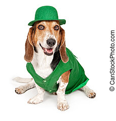 Basset Hound Dog Wearing St Patricks Day Outfit - Basset...