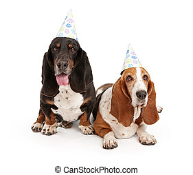 Basset Hound Dogs Wearing Birthday Hats - Basset Hound dogs...