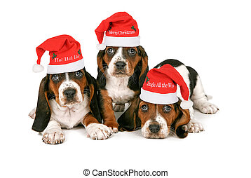 Basset Hound Puppies Wearing Santa Hats - Three Basset Hound...