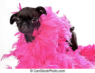 Black Pug Puppy with Pink Boa