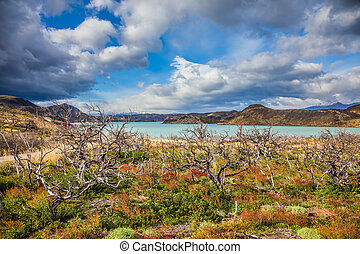 Torres del Paine Biosphere Reserve - Strong winds of...