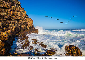 Pack of migratory birds at sunset - Powerful ocean surf in...
