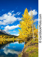 Yellowing aspens surround the lake - The concept of hiking....
