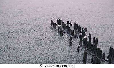 sea gull on groin in the Baltic Sea breakwater Sea gulls...