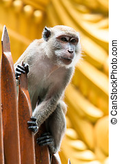 Batu Caves Monkey - A monkey perches on the staircase at...