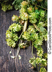 Green hop and ears of barley - Fresh branches and cones of...