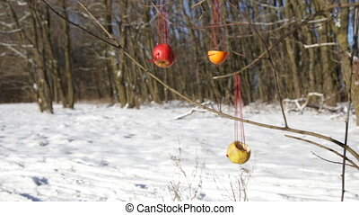 hanging on a tree original feeders made of apples and...