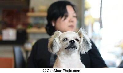 Dog so cute on chair with woman doziness to sleep - Dog so...
