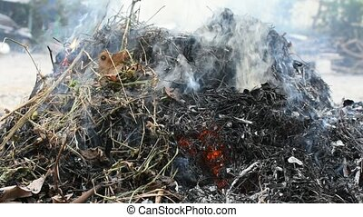 Burning dry leaves with smoke for cleaning in a garden