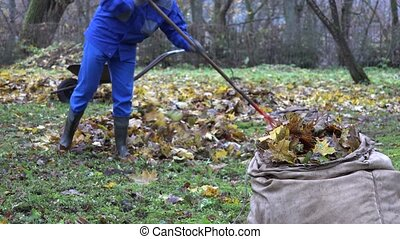 gardener man rake fall leaves and empty cart during autumn works in yard