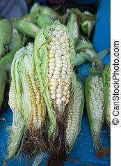non-gmo corn in Ecuador - gmo corn in Otavalo,Ecuador