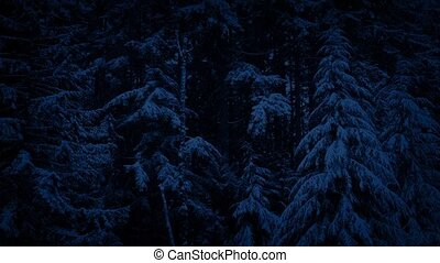 Snowy Forest Landscape At Night