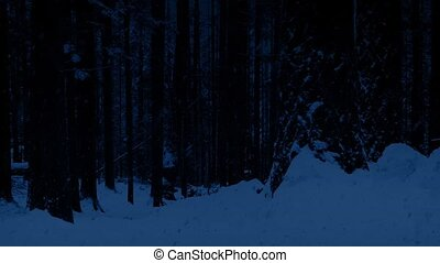 Snowy Woodland At Night - Passing woods in the snow in the...